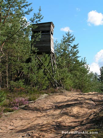 Hunting tower somewhere in forest